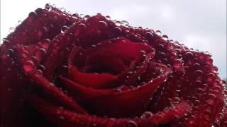 Awurama Badu - Odo Tie (Me Nni Obiara)