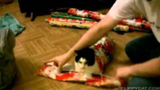 Wie man seine Katze richtig als Geschenk verpackt