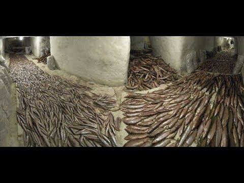 Смотреть Рыба под землей в пещерах мерзлотника!Эксклюзивное видео в п.Новый Порт! онлайн