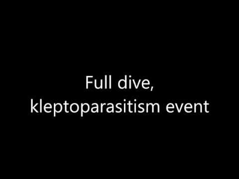 Online Resource 2: Full dive Kleptoparasitism event Handley & Pistorius 2015