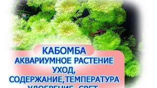 видео Кабомба каролинская