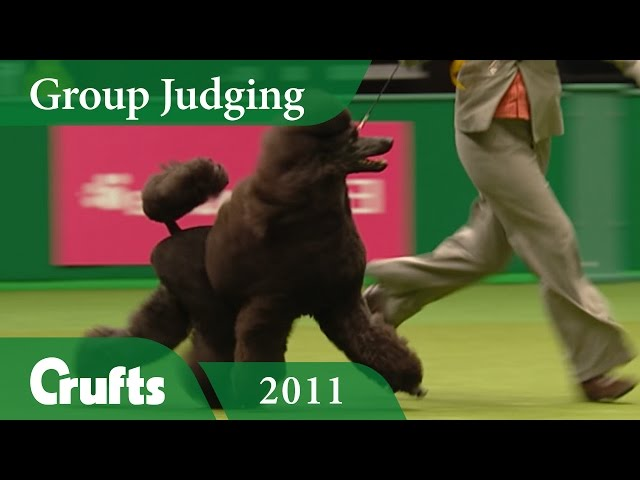 Standard Poodle wins Utility Group Judging at Crufts 2011 | Crufts Classics