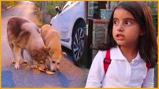 Hayvanları Besledik Fazla Yemeklerimizi Onlarla Paylaştık l Eğlenceli Çocuk Videosu