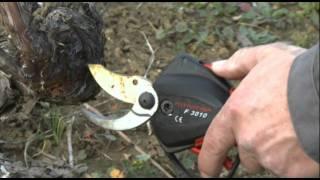 Infaco - Forbice elettrica F3010 in viticoltura IT