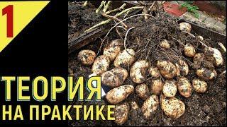 видео выращивание картофеля