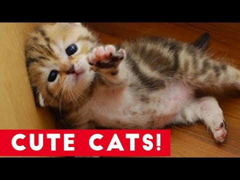Little Kittens and Cute Cats Compilation | Funny Pet Videos