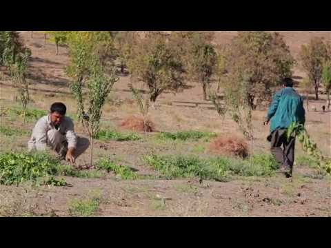 Horticulture Remains the Main Source of Livelihood in Central Afghanistan