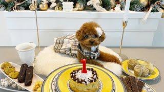 발렌타인데이가 생일인 특별한 강아지 (우리에게 와줘서 …