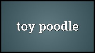 Toy Poodle Meaning
