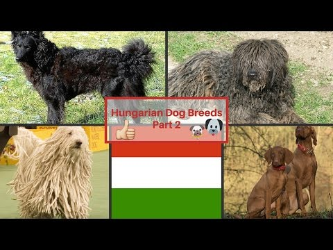 Hungarian Dog Breeds Part 2