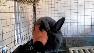 Сколько зарабатываю на кроликах???// Выгодно или нет???