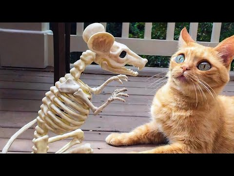 Funny CATS & DOGS - If it wasn't filmed, no one would believe it !!!