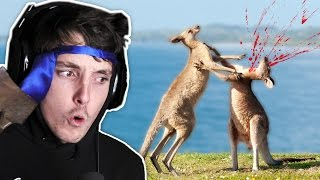 DEADLY AUSTRALIAN ANIMALS!