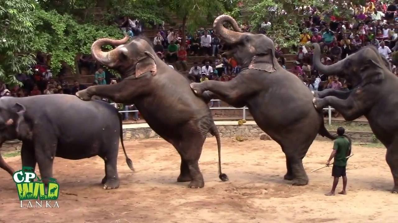 lacoste shoes karachi zoo youtube animals fighting