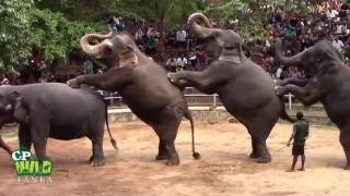 Elephants Dance At Dehiwala National Zoo (Sri Lanka)