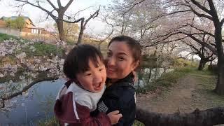 🇯🇵Cùng Gia Đình Quỳnh Ngắm Hoa Sakura Tại Công Viên Gần Nhà #190