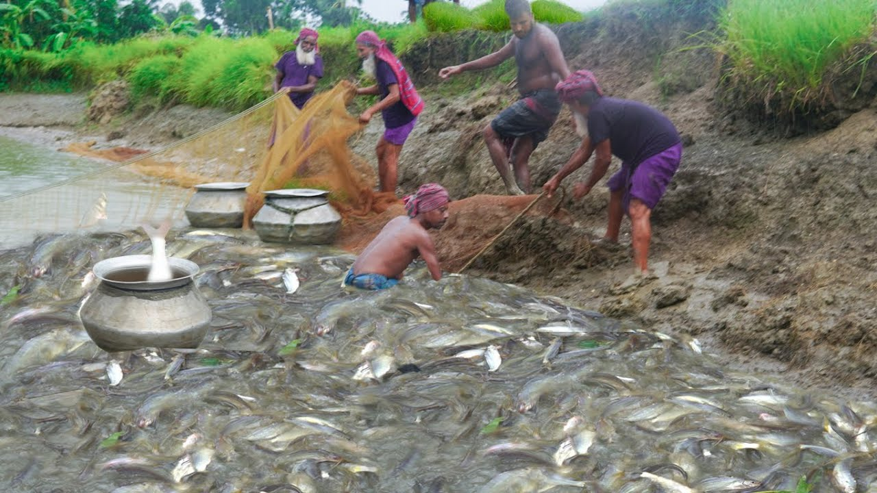 Expensive Gulsha Tengra Fish Catching & Cooking by Grandpa - Tiny Catfish Curry for Special People