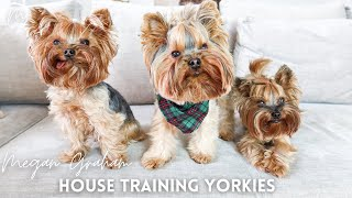 House Training Yorkies | Yorkie Training Secrets.