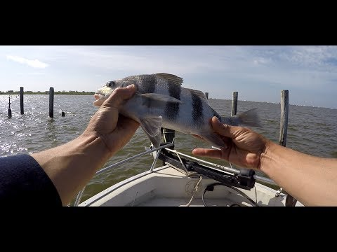 FAT SPECKLED TROUT fishing in Lake Pontchartrain, New Orleans, Louisiana, Black Drum and Croakers