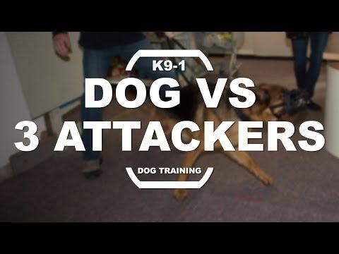 Dog vs 3 Attackers in Deli (K9-1.com)