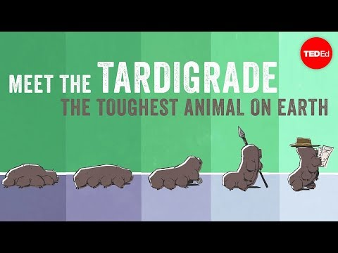 Thumbnail: Meet the tardigrade, the toughest animal on Earth - Thomas Boothby