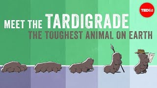 Meet the tardigrade, the toughest animal on Earth - Thomas Boothby thumbnail