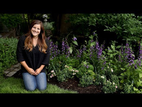 Planting Angelface Super Blue Angelonia for my Parents  // Garden Answer