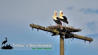 Trittau Storch / Storchenpaar / Hausrotschwanz 2016