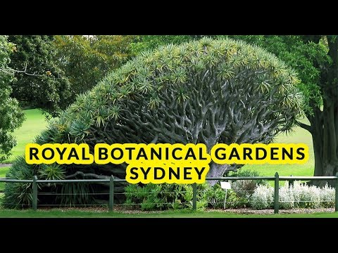 Royal Botanical Garden Sydney