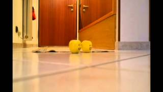Video Crazy Apples ft. Lil' Tomatoes ||| Official Expo 2015 Tribute download MP3, 3GP, MP4, WEBM, AVI, FLV Juli 2018