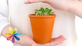 Как правильно пересаживать растения? - Все буде добре - Выпуск 535 - 25.02.2015 - Все будет хорошо