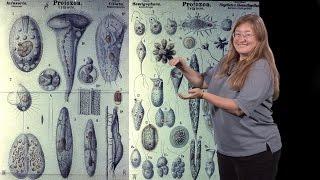 julie theriot stanford hhmi 3 evolution of a dynamic cytoskeleton