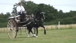 Repeat youtube video Stunning horses in Traditional  trade vehicles