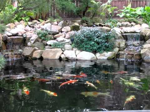 Koi pond in rancho santa fe ca youtube for Koi pool santa
