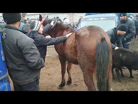 Рынок скота. 170 миндик Пил Букалар. Тай кулун.
