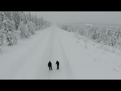 Skog kan bli värdelös för ägare - Nyheterna (TV4)