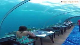 Dubai Aquarium And Underwater Zoo Hotels and tickets