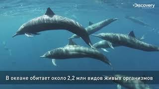 Всемирный день океанов | Discovery Channel