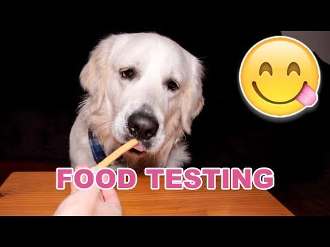 ASMR Dog Reviewing Different Types of Food #3