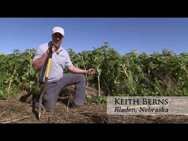 Keith Berns: Multiple Companion Cover Crops Enhance Soil
