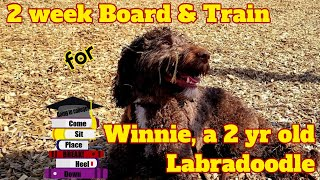 2yr old Labradoodle (Winnie)/ 2 Week Board and Train/ Best Delaware Dog Trainer