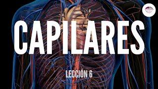 Principales capilares partes de los