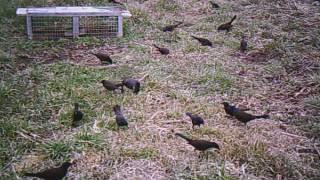 Bird Invasion