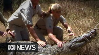 Irwin family furious at Queensland Govt for allowing crocodile eggs to be harvested | ABC News