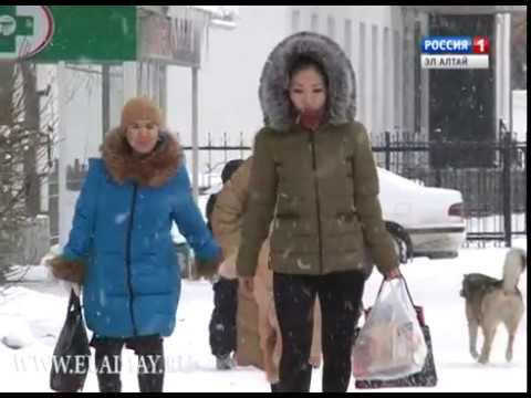 В Республике Алтай снижается уровень безработицы
