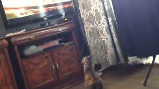 Лол, кошка любит смотреть телевизор))