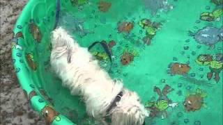 Dog Training In Marlton Nj
