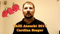 Chilli Anzucht 2017: Carolina Reaper :: Schärfste Chili der Welt