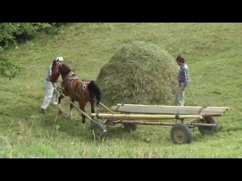 Romania, Transylvania Hay Camp 2015 Part 2 (of 3)