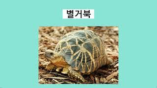 육지거북 종류 소개/거북이 보호 협회